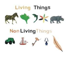 Living Thing Non Living Thing (New-Design) Foaming Sheet